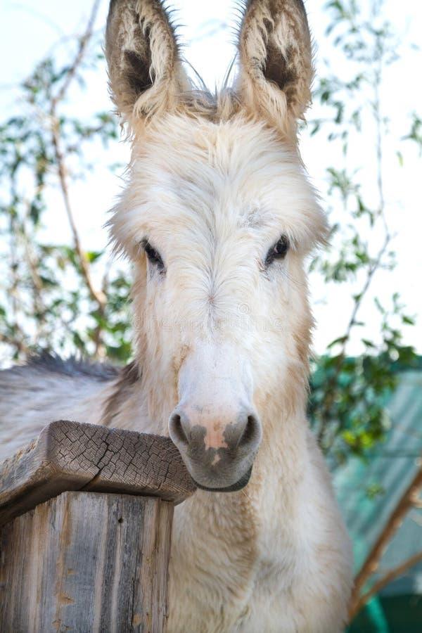 burro arkivfoton