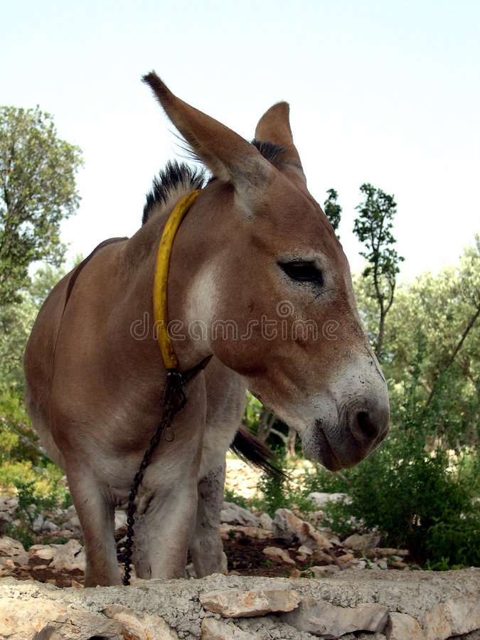burro arkivfoto