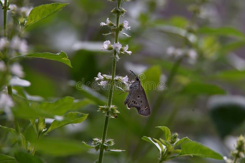 Burro bianco appollaiato sui fiori immagini stock