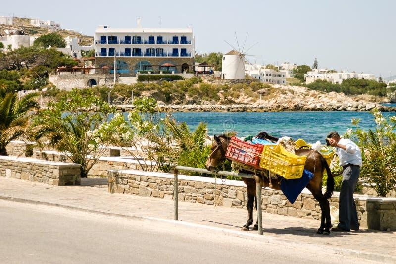 Burro en Grecia foto de archivo