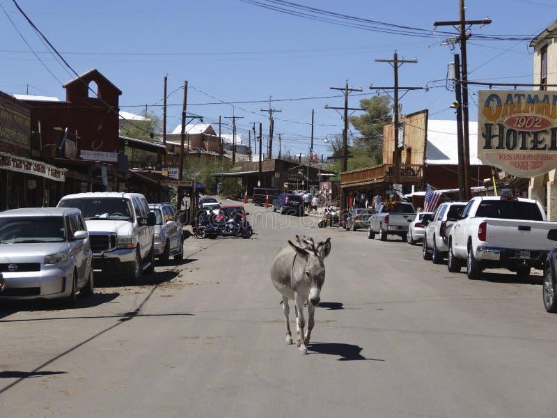 Burro errant dans Oatman, Arizona, août 2014 photo libre de droits