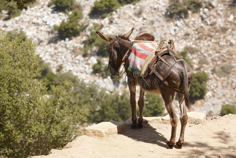 Burro griego tradicional Modo rural de transporte crete g fotografía de archivo libre de regalías