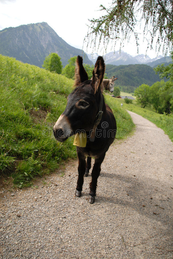 Free Burro On A Way Royalty Free Stock Photography - 8993077