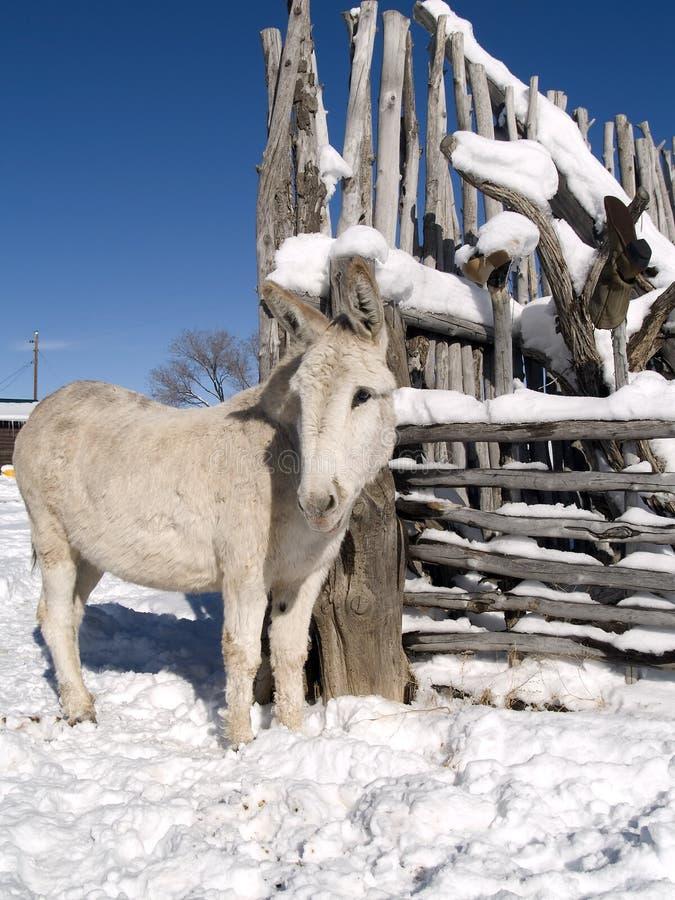 Burro van de winter royalty-vrije stock afbeeldingen