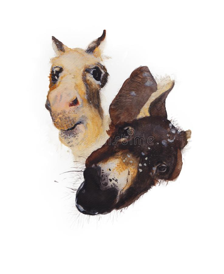 Burros aislados en el fondo blanco Ejemplo pintado a mano de la acuarela de los burros ilustración del vector
