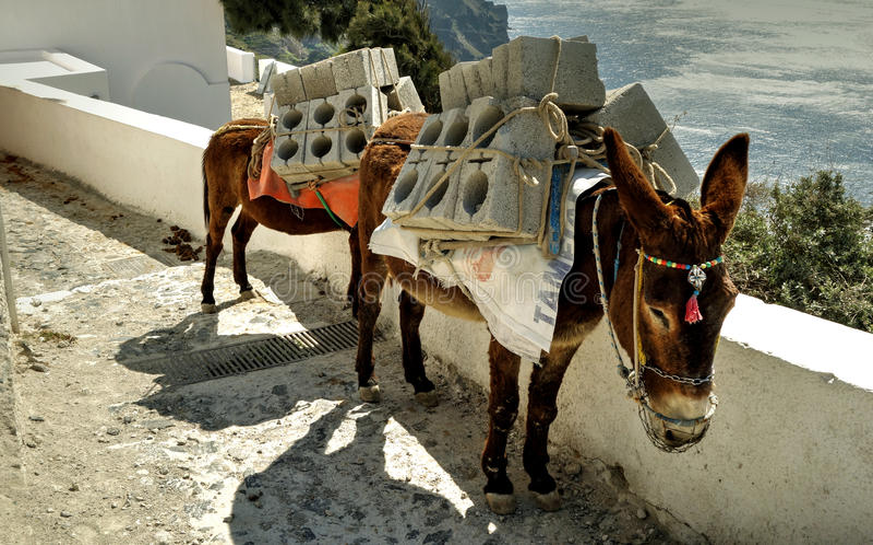 Burros caricati con i blocchi in calcestruzzo fotografie stock libere da diritti