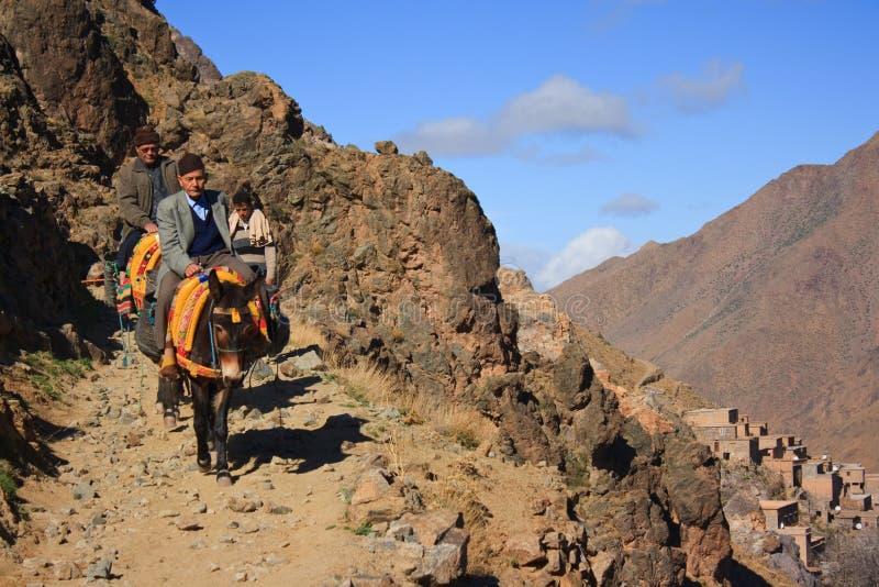 Burros en el camino en las montañas de Altas, Marruecos imagenes de archivo