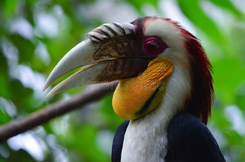 Burung Julang EMAS - Vogel lizenzfreies stockbild