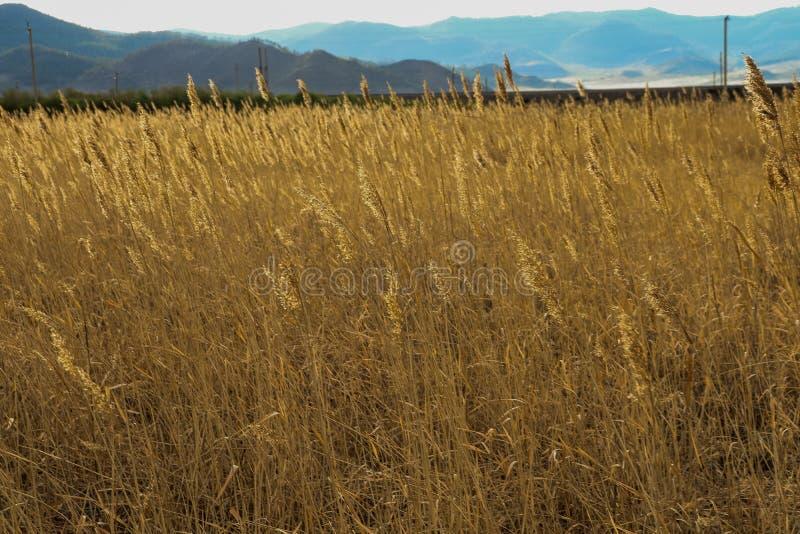 Buryatia Meer Baikal Stilte Het de lente van ` s stock foto