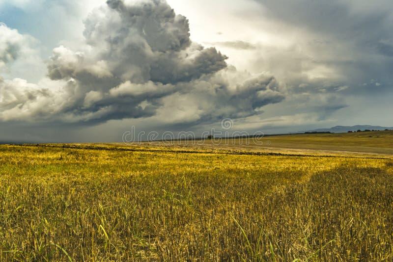 Burz chmury nad pszenicznymi polami obrazy royalty free