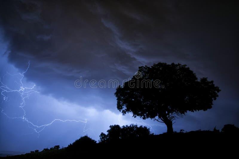 Burza, błyskawica, drzewo, holm dąb obrazy stock