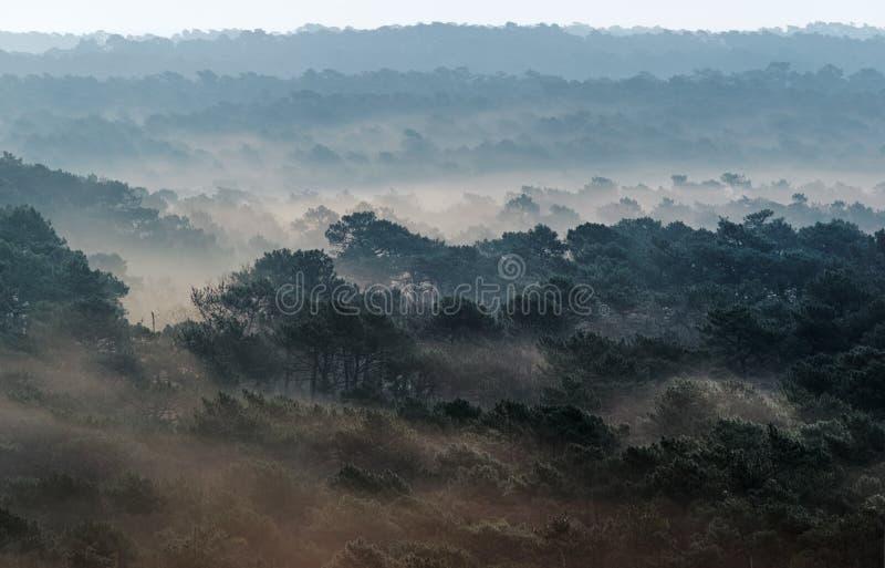 Burza piaskowa w Landes lasowych obrazy royalty free