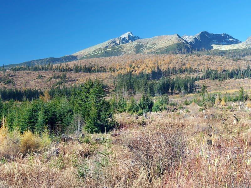 Burza uszkadzający krajobraz w Wysokim Tatras obraz royalty free