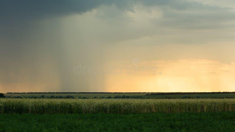 Burzowe chmury są szaroniebieskie nad polem z zbożowego pszenicznego wieczór czasu zmierzchu lata Thunderclouds ciemnym deszczem zdjęcie royalty free