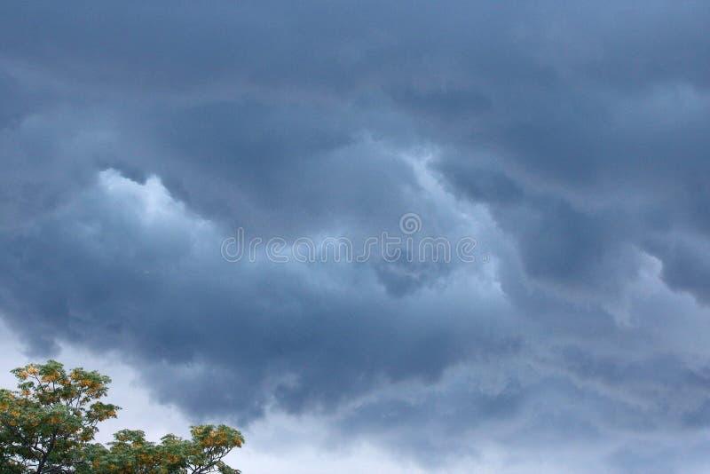 BURZOWY nieba I SYRINGA drzewo zdjęcie stock