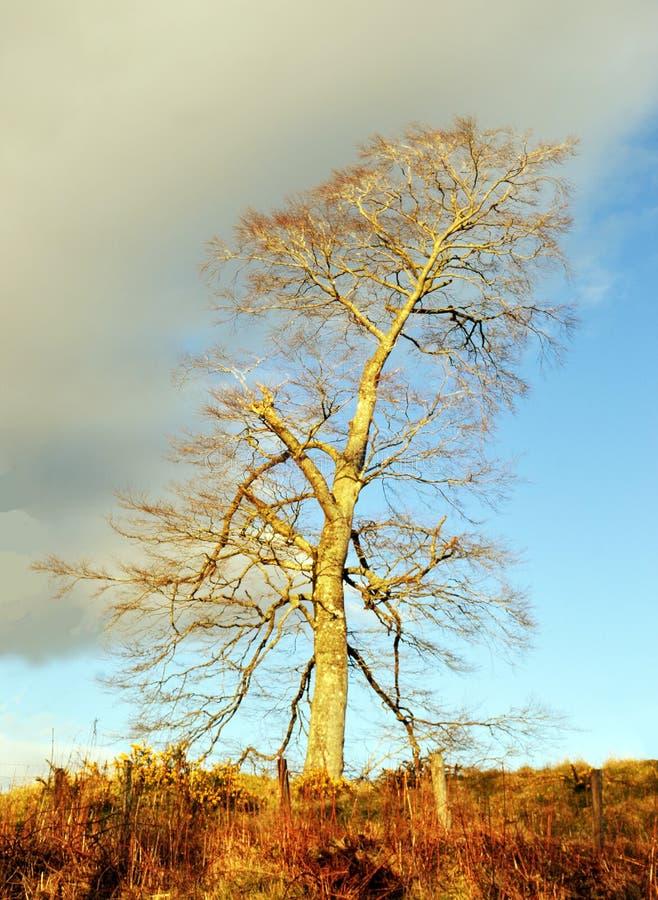 Burzy chmura i samotny drzewo fotografia stock