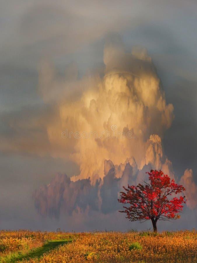 Burzy chmura wchodzić na górę za pojedynczym drzewem zdjęcie royalty free