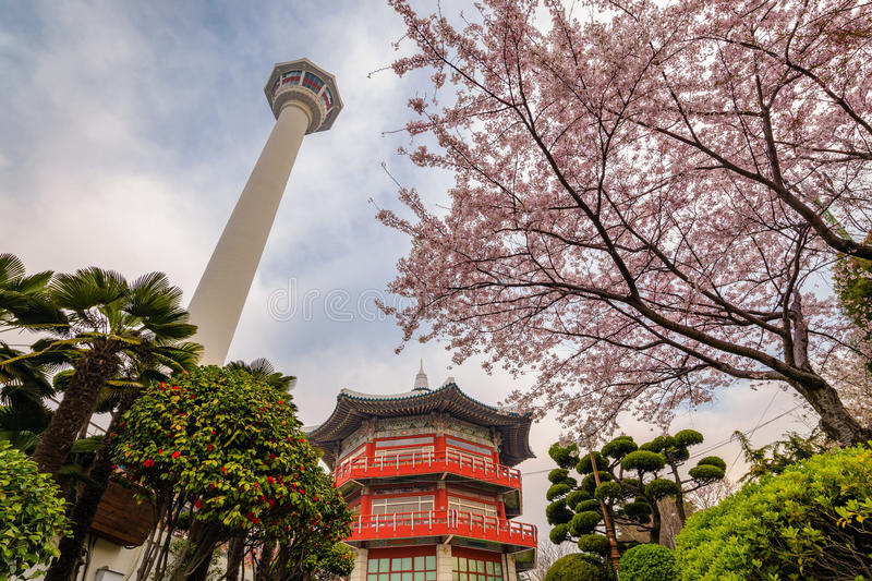 Busan Tower, Korea. Busan Tower with spring cherry blossom, Busan, Korea royalty free stock photography