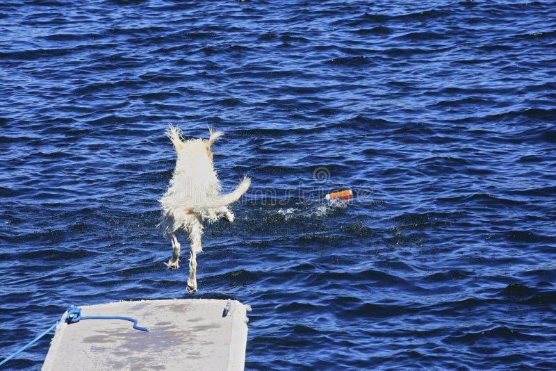 Busca branca do cão fotografia de stock royalty free
