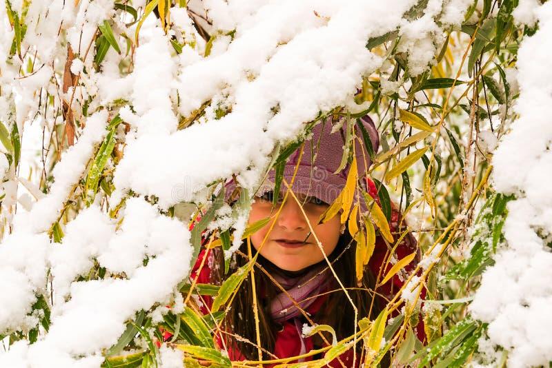 Busca do couro cru do inverno na neve imagem de stock