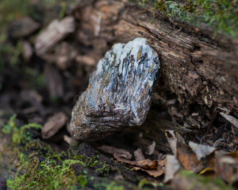 Buse Astrophyllite i matrisprov från Ryssland på ett trädskäll i skogen andra namn: Aastrophyllite Asterophyll royaltyfri bild