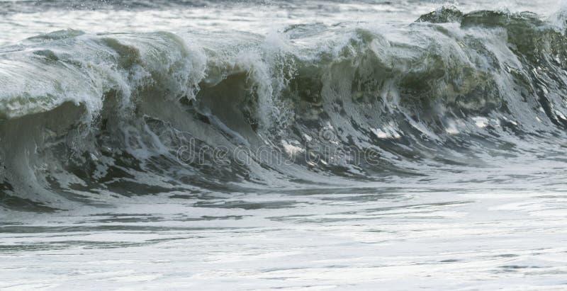 Busen vinkar i Atlanticet Ocean arkivfoton