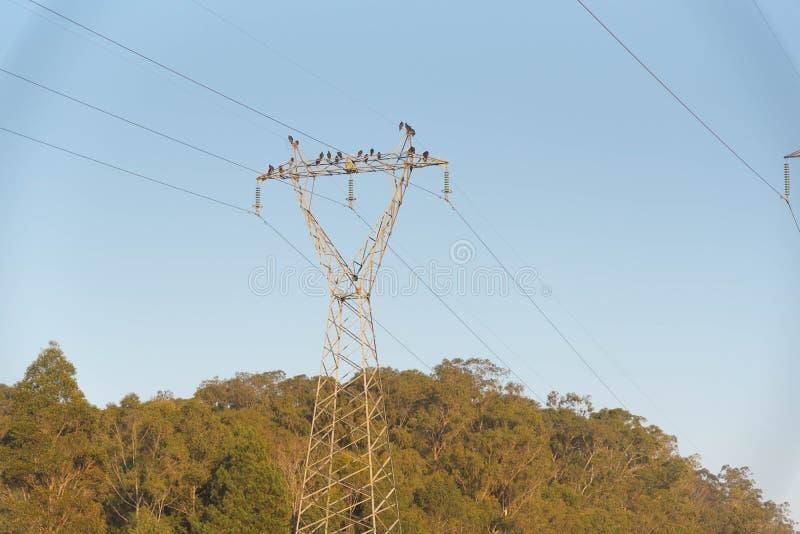 Buses et vautours du courant électrique 01 photos libres de droits