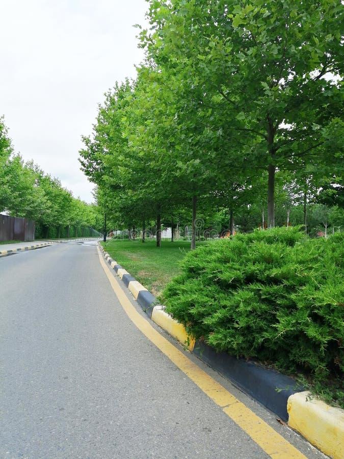 Bush, árvores e marcações de estrada imagens de stock