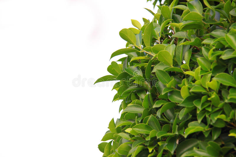 Download Bush stock photo. Image of shape, object, leaved, plant - 21393754