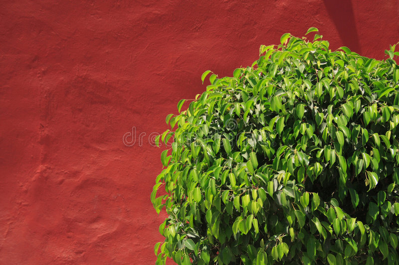Download Bush_5945 stock image. Image of lanscaping, decoration - 6511699