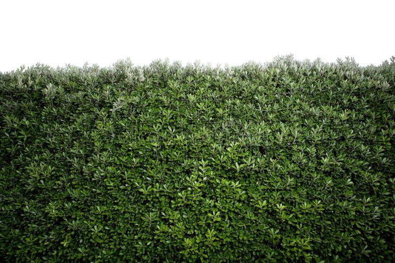 Bush imagem de stock