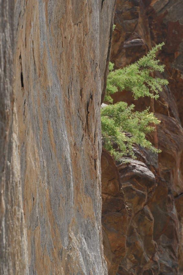 Bush aninhou-se em Rocky Chasm fotografia de stock royalty free