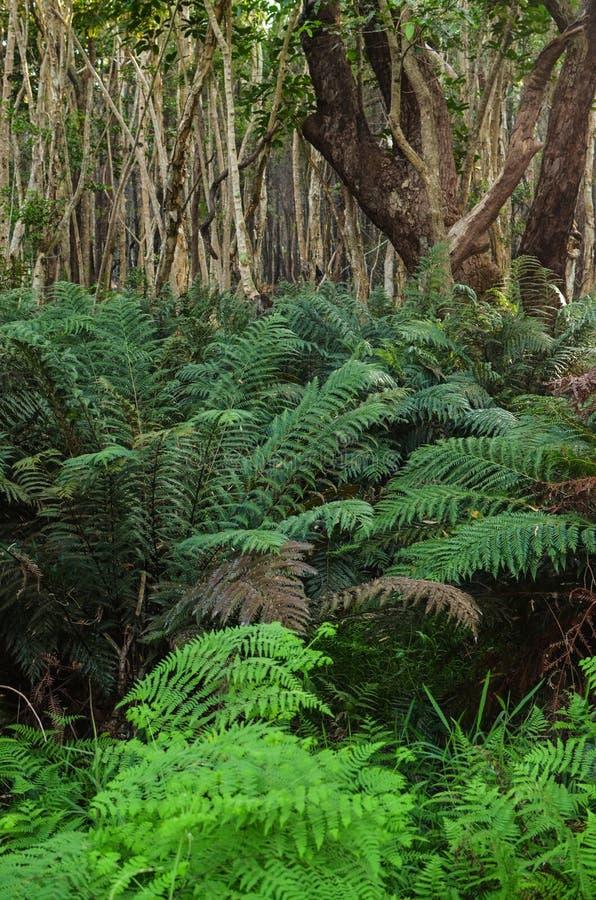 Bush australien images stock