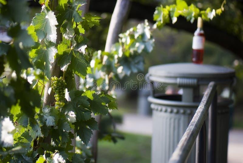 Bush av den vita druvan och vinflaskan arkivbilder