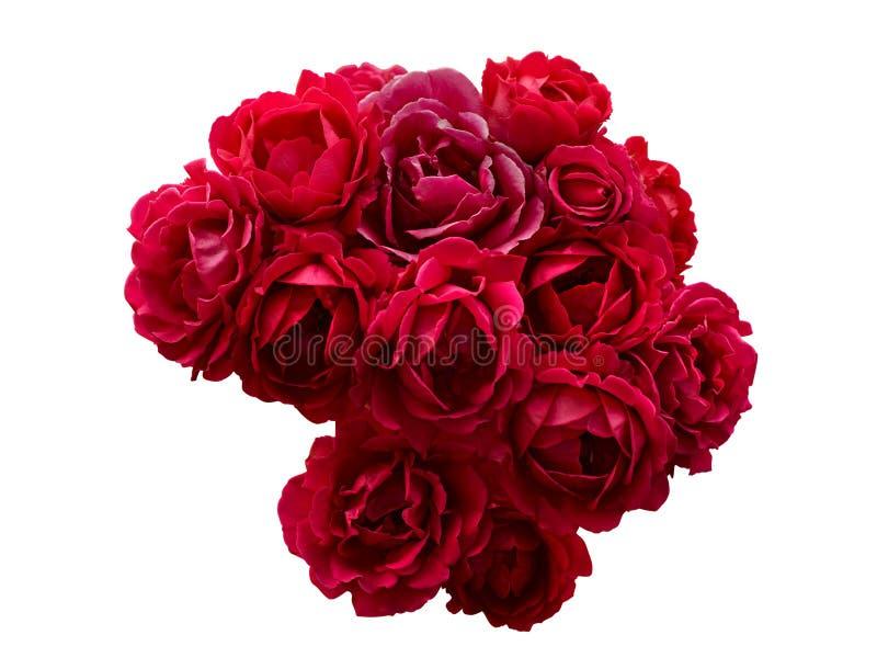 Bush av röda isolerade rosblommor royaltyfri fotografi