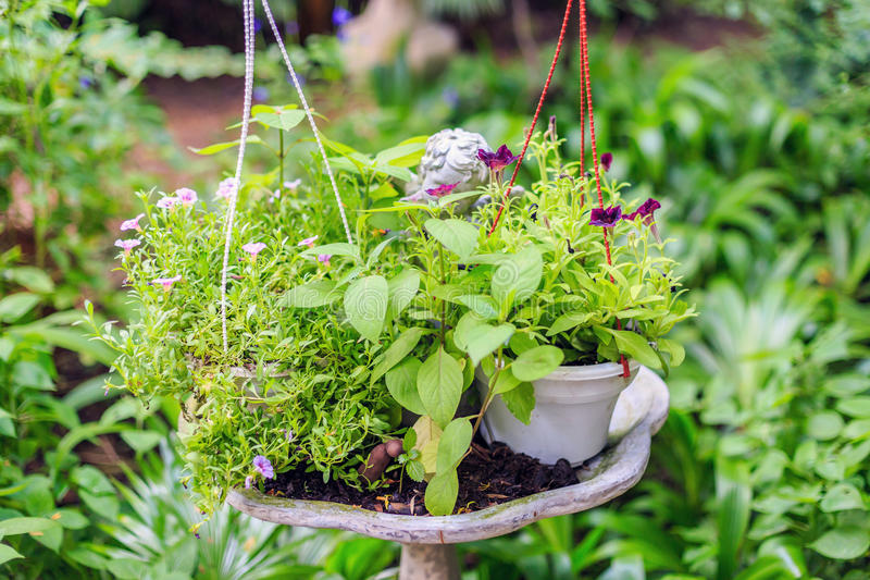 Bush of basil and flower in cement pot. Bush of basil and flower in cement pot in the garden royalty free stock photography