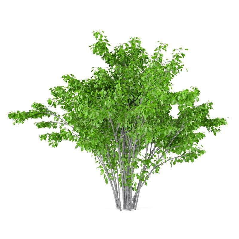 Bush-Baum lokalisiert. stock abbildung