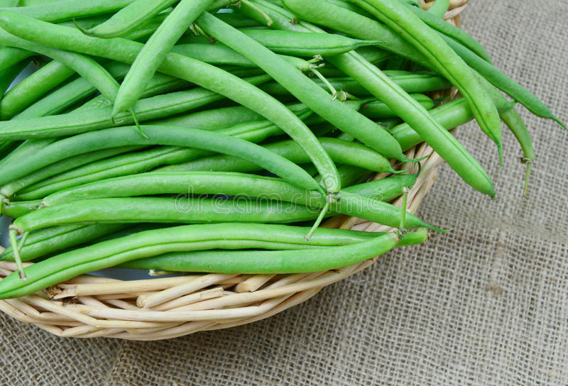 Bush beans. Close up from healthy bush beans stock photography