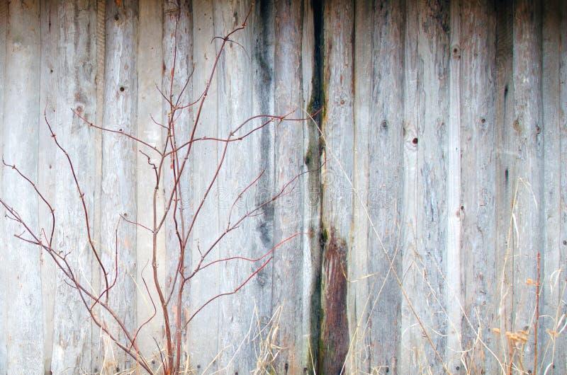 Bush blisko starego drewnianego ściennego tło wizerunku obraz royalty free