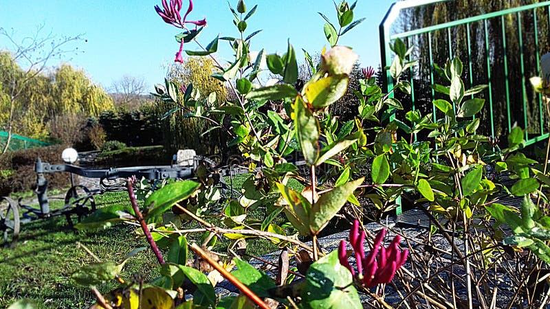 Bush-bloei vroeger in de herfst stock foto's