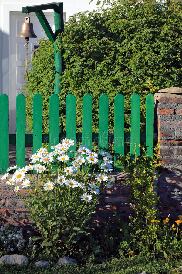 Free Bush Blooming Daisies Next To Green Picket Fence Royalty Free Stock Images - 33641189