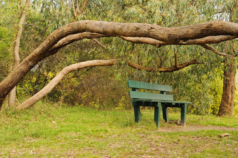 Download Bush in blossom and bench stock image. Image of natural - 26383453