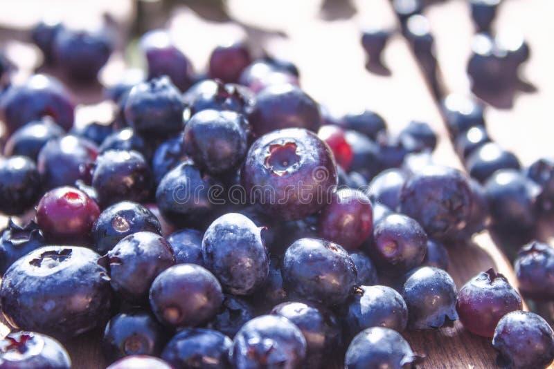 Bush blueberries stock photos