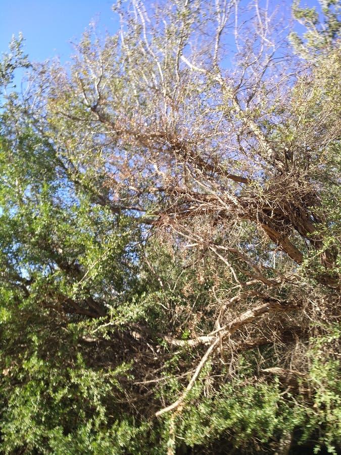 Bush-bomen stock afbeeldingen