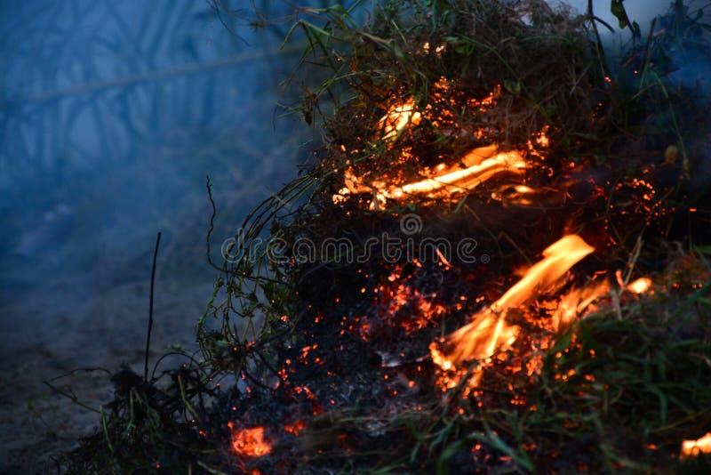 Bush brûlant images libres de droits