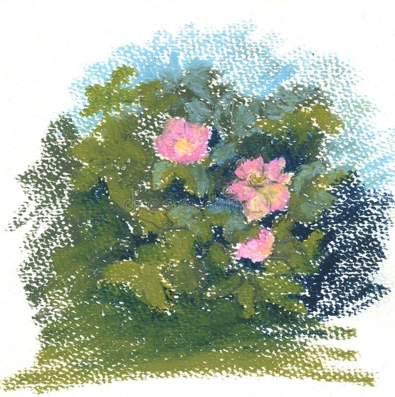 Bush color de rosa salvaje, pinturas en colores pastel de las flores color de rosa salvajes ilustración del vector