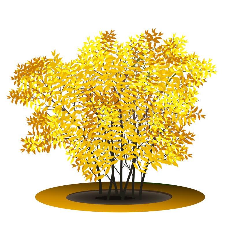 Bush com folhas e sombra do amarelo ilustração stock