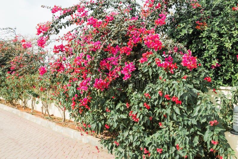 Bush con las flores cerca de la casa en un día de verano fotos de archivo libres de regalías