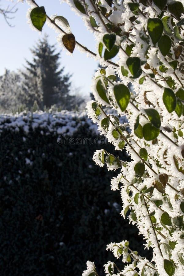 Bush a couvert dans la neige photos stock