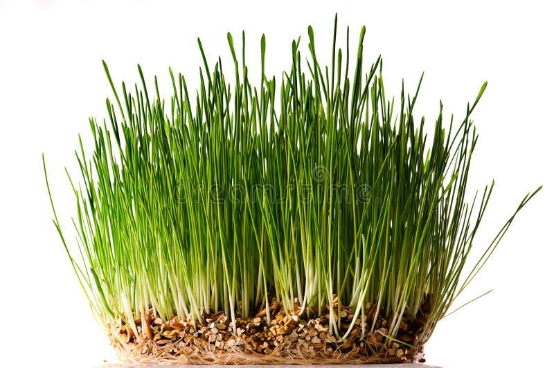 Download Bush d'herbe verte photo stock. Image du pelouse, vert - 8659262